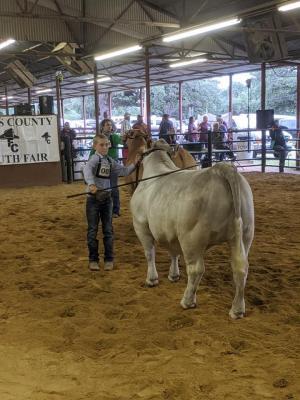 Cattle Showmanship Junior- Colton Ranly
