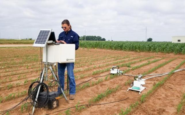 Walker Crane, a member of Nithya Rajan's team, measures nitrous oxide measurements from a young sorghum field. (Texas A&M AgriLife photo)